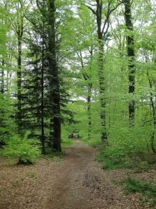 Springtime in the forest at Bagnoles de l'Orne.