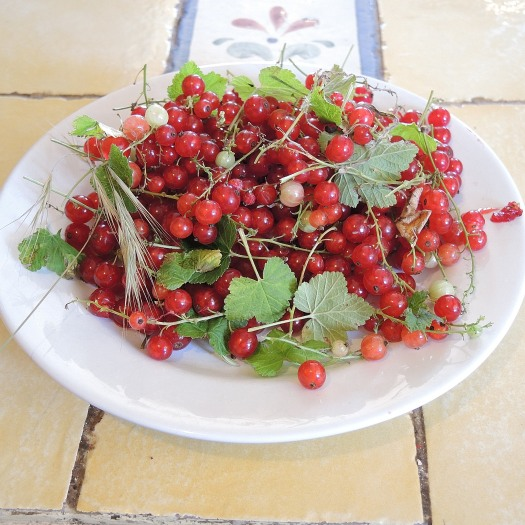 We appear to have redcurrants in our garden!