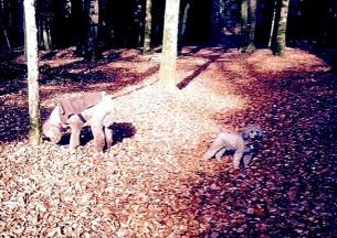 Alice & Georgie in Autumn 2